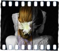 Jodi_Picoult_The_Storyteller
