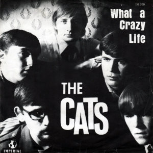 the-cats-what-a-crazy-life